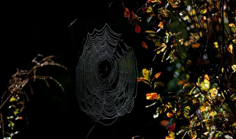 24.09.2018 | Bild des Tages | @ Florian Gruber: Spinne im Bayerisch...