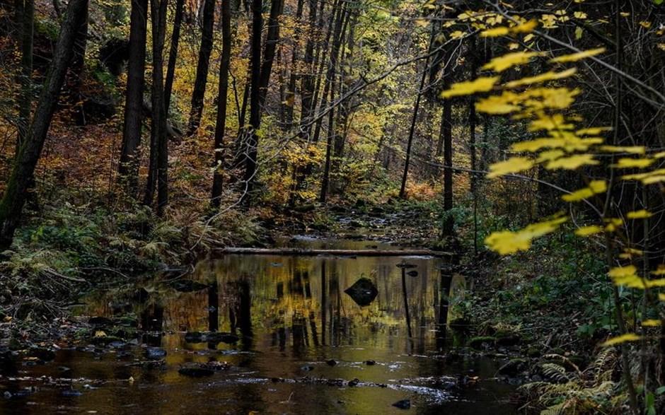 07.11.2018 | Bild des Tages | Herbst in Deutschland - von DreamBoy auf Dream Boy