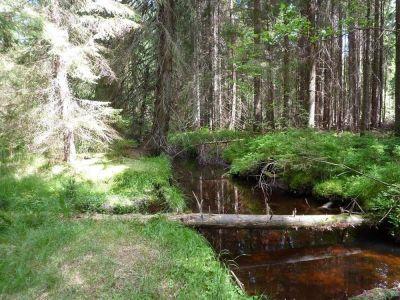 Durch wilde Wälder am Sagwasser   Dream Boy