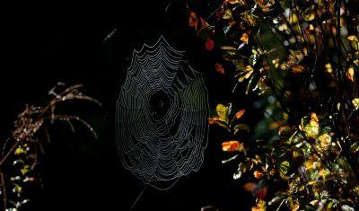 Spinne im Bayerischen Wald